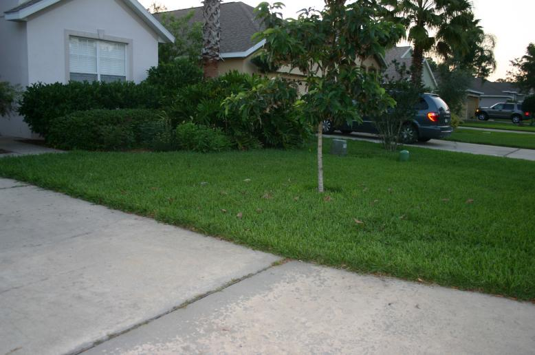 Lawn  with 3-0-5 on 4-3-12