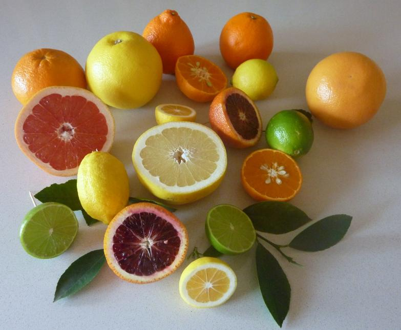 citrus_fruit_collection
