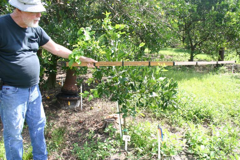 dick_marshall_young_orange_tree_14_on_7-17-14