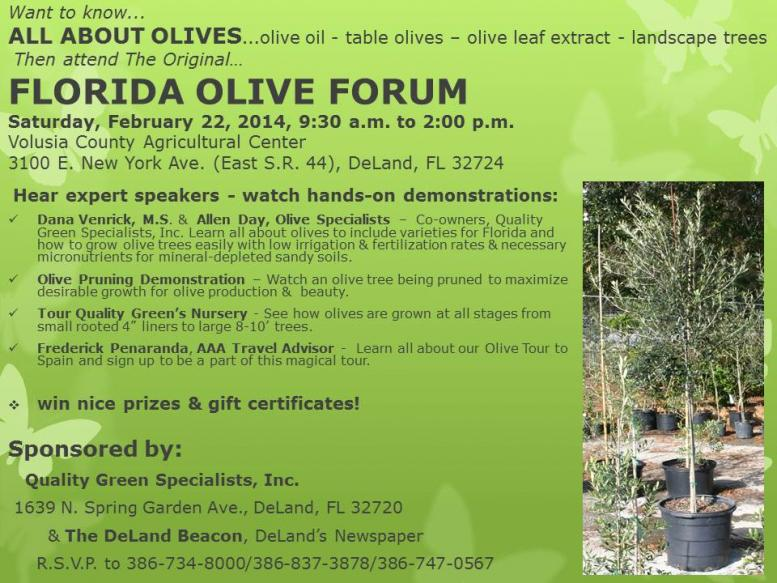 Curing Table Olives - Quality Green Specialists