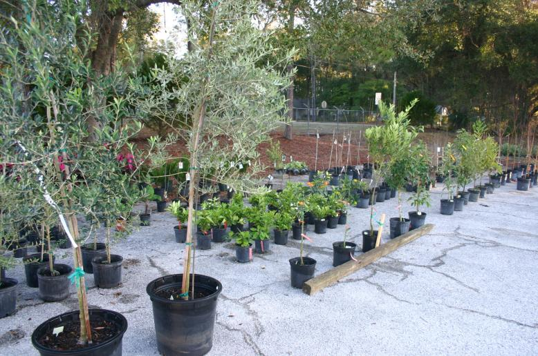 fruit trees at QGC Nursery 12/12 looking N.E.