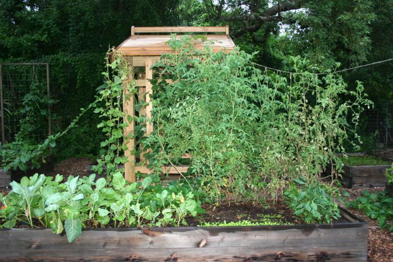 Garden update 3 Brian OHalloran