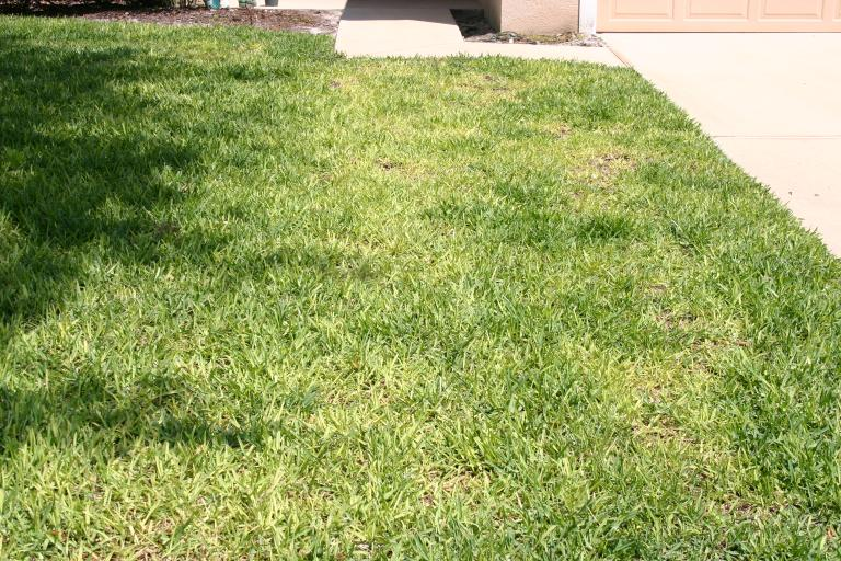 Lawn DeBary fertilized with 3-0-5 photo C 4-27-14