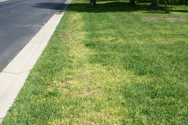 Lawn DeBary fertilized with 3-0-5 photo D 4-27-14