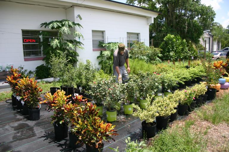 nursery_display_showing_crotons_david_wiggins_watering_looking_down_7-10-15