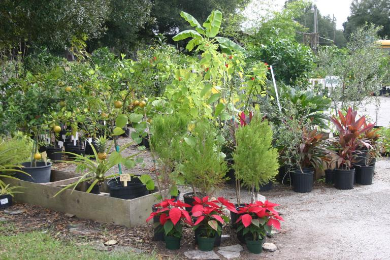 nursery_entrance_showing_red_cedar___poinsettias_12-4-15
