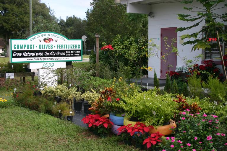 nursery_front_display_best_showing_sign__papaya__poinsettias___colorful_plants_12-4-15