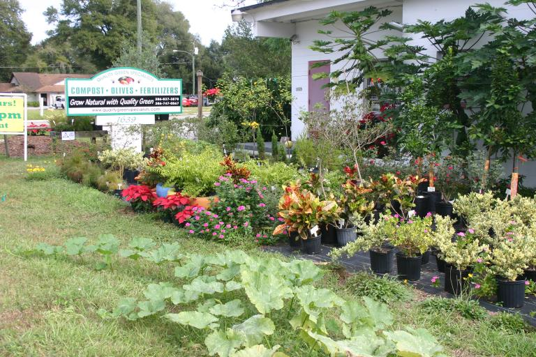 nursery_front_display_showing_seminole_pumpkins__papayas___colorful_plants_12-4-15