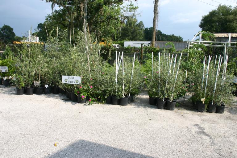 nursery_olive_section_7-30-2015