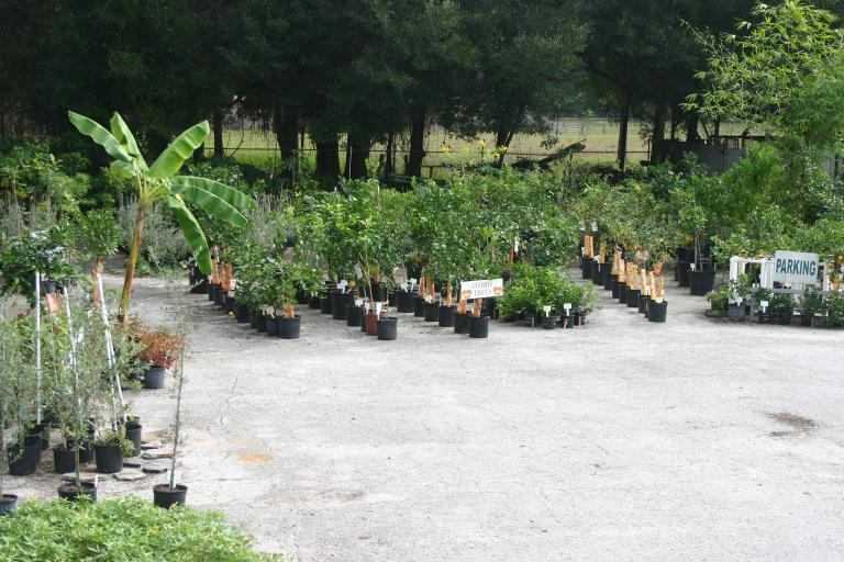 nursery_overall_showing_parking_area_12-4-15