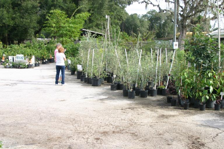 nursery_south_side_judy_showing_customer_olives_11-14-15