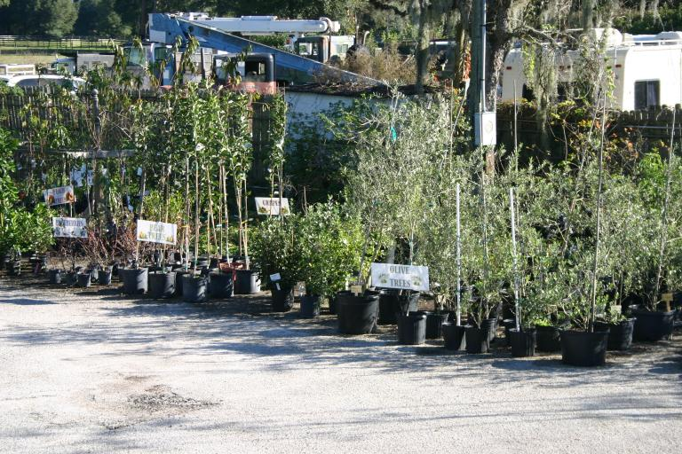 nursery_south_side_olives__pears__blueberries__grapes__peaches_12-11-15