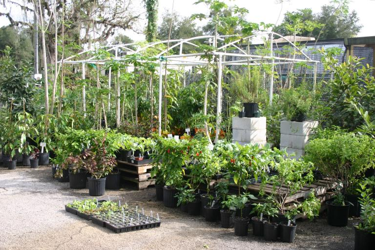 nursery_south_side_peppers__vegetables___entire_greenhouse_11-14-15