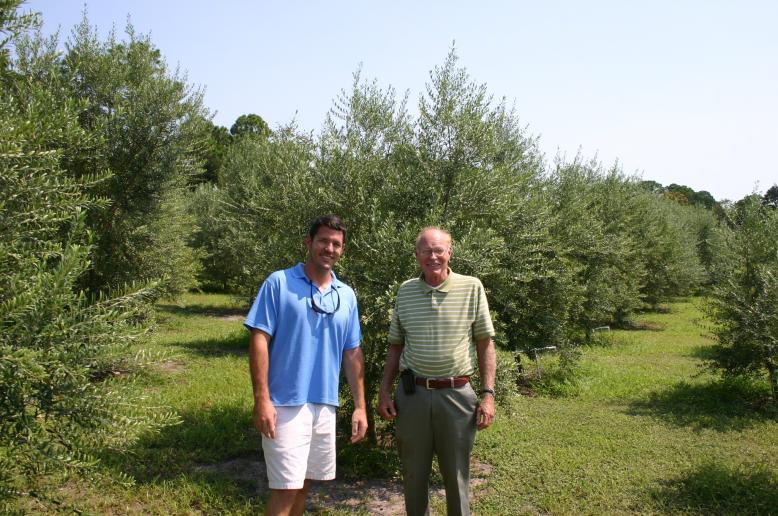 olive grove Allen Green's -R. Davenport & Dana V.