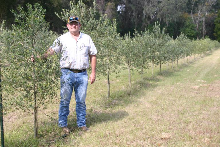 Olive Production - Quality Green Specialists