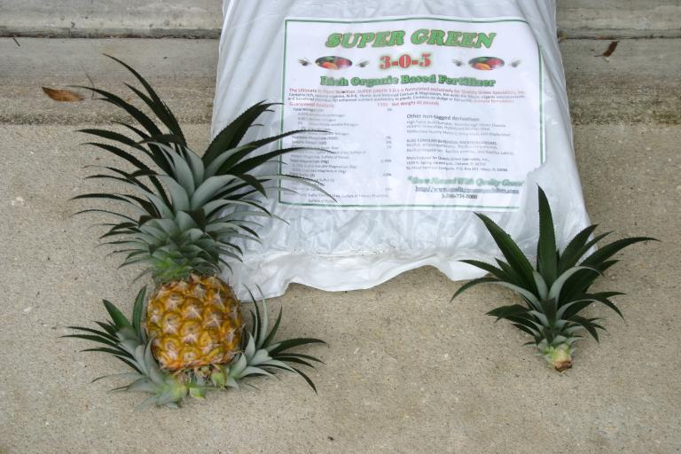 pineapple_grown_with_3-0-5_fertilizer_1-10-15