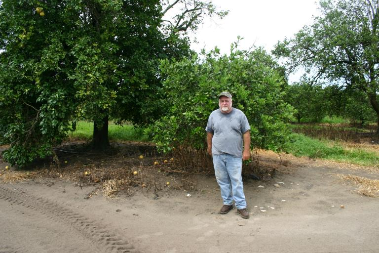 ron_kelly_with_a_recovering_orange_tree_7-15-15