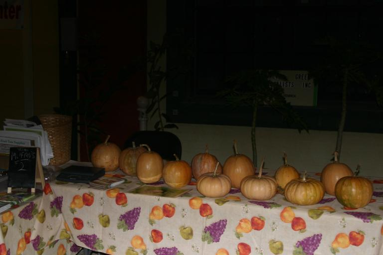 seminole_pumpkins__1