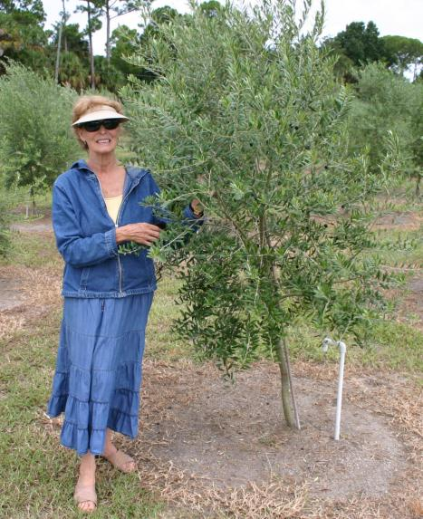 olive_tree_with_louella Allen Greens grove_cropped